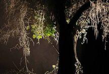 """GISCHT - Basel 2015 / Ende einer Baumbiographie, ein abgestorbener Kirschbaum. Diese Kunstintervention bejaht das Leben und erkennt Sterben als normalen Prozess, der mit besonderer, letzter Aufmerksamkeit begleitet werden soll. Er wird mit einem angepassten """"Mantel"""" bedeckt und umhüllt, wird dazu mit heißem Wasserdampfnebel vereist und so mit einer dicken Eisschicht überzogen. Der abgestorbene Kirschbaum wird als letzte Geste gefällt, aus seinem Holz hauchdünne Bretter gesägt."""