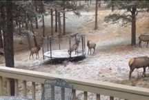 Colorado Wildlife / by 9NEWS Denver