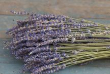 Dried Flower Bunches / Dried Flower Bunches for Weddings or Home Decoration