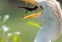 snakes & birds