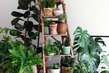 Indoor Garden Idea