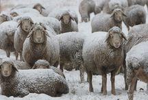 Foto-Tipp für schneereiche Winterbilder / Viele kennen das Problem, dass Wintermotive gern mit einem Blaustich oder Grauschleier versehen sind. Wenn Ihr mehr Erfahren und Sehen wollt, dann geht auf unseren Tipp auf unsere Webseite  http://lunim.de/kleiner-tipp-fuer-ihre-winterbilder/