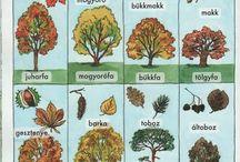 Ősz/ Autumn
