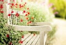 Park Benches / by For the Love of Cooking - Pam Nelson