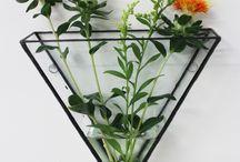 Plants&hommii