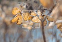 Herbst / Schöne Herbst Fotos