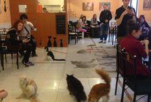 Cat's café / by Daphné Van Grieken