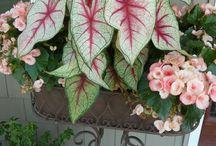 Garden/flowers / by Hannah Parker