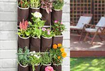 plantas dentro del hogar