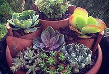 Gardening // Flowers / by Haley Wilke