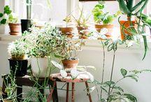 INTERIEURADVIES // GROENE VINGERS / Online moodboard voor STREEPT interieur & concepts. 'Groene vingers' is voor de botanische sfeer in je living, keuken of slaapkamer. Voor meer inspiratie of voor interieuradvies op maat ga naar www.streept.com
