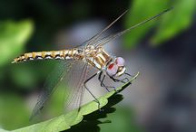 Macro Photography / by Michelle O