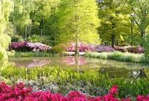 virágok, virágzó kertek / virágok fotói, szép kertek