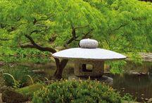Japanilainen puutarha - Japanese Garden / Japanese garden and bonsai trees.