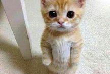 Gattini e disoccupati / Gattini simpatici e brutti disoccupati