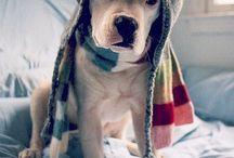 pes v cepici