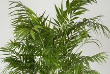rośliny doniczkowe - domowe