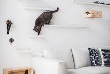 Cat climbing walls