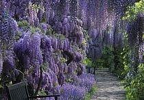 aranżacje ogrodu