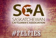 Saskatchewan Cattlemen's Association / Love your food? Meet your Canadian Beef farmers in Saskatchewan.