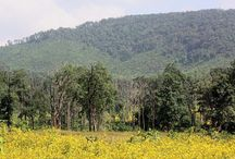 Kotagarh Wildlife Sanctuary of Odisha