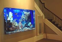 dream aquarium...