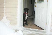 Doggies!  / by Anna Doddridge