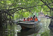 Activities to do in Sri Lanka