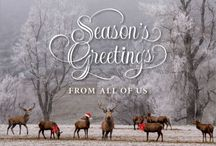 Holiday Card Design Templates / Greeting cards and invitation card templates from our online holiday card maker.