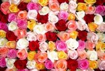 flowergardens