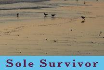 Sole Survivor: One Man's Testimony for Christ