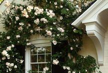 Blommor, trädgård