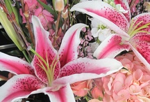 lilies / by Daiva Channing
