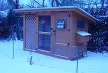 for the home- CHICKEN COOP / by Tonya O'Dell
