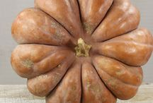 HEIRLOOM | pumpkins