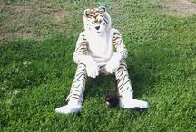 my fursuit / costume teddy tiger