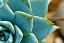 Cactus & succulents / by Vanessa Schwartz