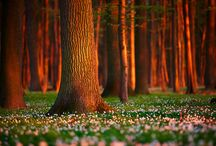 In the Woods / There is so much beauty to be found in the woods. / by Trees