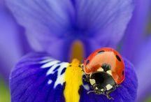 Ladybirds ❤️ / Beautiful little creatures ......