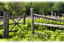 Garden Gates / by Stacy Harrison-Butters