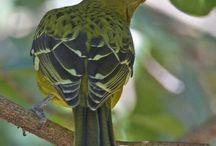 My Wonder Zoo : Tweety Bird & Friends ! / Passerines, Hummingbird ...