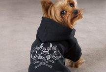 Dog clothes ideas
