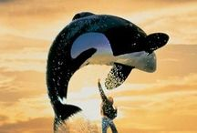 Free willy <3