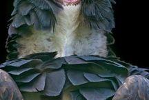 вдохновлено птицами