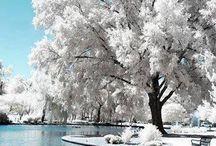 la magia della neve ❄❄
