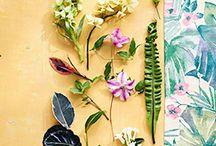 Plantas / Plants