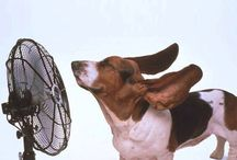Air Conditioning FUN Facts | Home Experts
