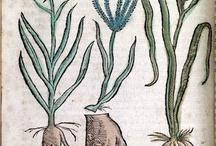 植物志怪学