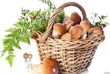 grzyby  Mushrooms / grzyby  Mushrooms