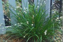 down my garden path / plants and flowers in my garden